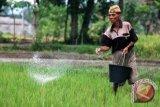 Dirjen: STP kembangkan pertanian Sumsel