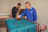 Menteri Koperasi dan UKM Syarifuddin Hasan sedang mencoba alat membatik saat meninjau pusat kerajinan batik Jambi di kawasan Seberang Kota Jambi, Sabtu (2/11).(ANTARA FOTO/Ist)