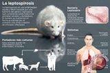 Dinkes minta masyarakat galakkan PHBS hindari leptospirosis