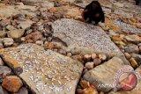 Nelayan menjemur ikan di batu dermaga pelabuhan perikanan samudera, Lampulo, Banda Aceh, Kamis (9/1). Ikan kering hasil tangkapan nelayan kecil tersebut dijual seharga Rp10.000 hingga Rp15.000 kg.<br /> ANTARAACEH.COM/Ampelsa/13