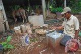 Seorang warga melihat kondisi instalasi biogas dari kotoran ternak sapi dan kerbau yang dikelola kelompok peternak Sendang Subur, Desa Lau, Dawe, Kudus, Jateng, Senin (6/1). Sejumlah warga mengaku selama dua tahun terakhir memanfaatkan biogas dari kotoran ternak untuk kebutuhan sehari-hari sehingga tidak membutuhkan gas elpiji. ANTARA FOTO/ Andreas Fitri Atmoko/wra/14