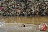 Seorang anak berenang di lapangan futsal yang terendam banjir di Rawajati, Jakarta Selatan, Selasa (4/2). Akibat tingginya curah hujan dan meluapnya sejumlah sungai mengakibatkan sejumlah wilayah di Jakarta kembali terendam banjir. ANTARA FOTO/Zabur Karuru/wra/14