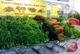 Ilmuwan UNDIP ciptakan pengawet sayuran berteknologi ozon