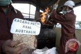 Petugas Balai Besar Karantina Pertanian melakukan pemusnahan sejumlah komoditi di Makassar, Sulsel, Rabu (30/4). Sebanyak 12 jenis komoditi yang termasuk dalam organisme pengganggu tumbuhan karantina dimusnahkan yang berasal dari beberapa negara seperti Jepang, Malaysia, Iran, Australia serta beberapa daerah di dalam negeri. ANTARA FOTO/Dewi Fajriani/wdy/14