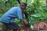 `Genosida` Lebah di Gugusan Perbukitan Lombok Utara