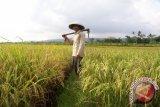 Mantri Tani Dinilai Berperan Penting Majukan Pertanian