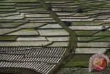 Tujuh daerah di Indonesia defisit beras
