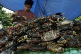Tangkapan terbatas, harga kepiting bakau naik