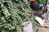 Sugar Palm Fruit Orders in West Pasaman Increased