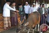 Disnak Biak Numfor siagakan 12 petugas pemeriksa hewan kurban