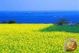 Korea Selatan pertimbangkan bebas visa bagi wisatawan Indonesia ke Pulau Jeju