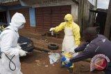 AS Disengat Bahaya Virus Ebola