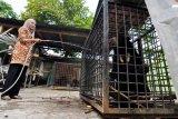 Petugas menyirami seekor Beruang Madu (Helarctos Malayanus) yang terperangkap di lahan perkebunan Aur Gading, Sarolangun (sekitar 179 km dari Kota Jambi) setibanya di Kebun Binatang Taman Rimba, Jambi, Kamis (2/10). Beruang jantan berusia sekitar 6-8 tahun tersebut masuk ke dalam perangkap yang dipasang petugas BKSDA setempat pada Selasa (30/9) dini hari di lokasi perkebunan yang sering ditemukan konflik manusia-satwa. ANTARA FOTO/Wahdi Septiawan/ss/pd/14.