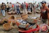 Buruh pelabuhan mengangkut ikan tangkapan nelayan tradisional di Pelabuhan Lampulo, Banda Aceh, Sabtu (8/11). Pasca penandatanganan moratorium perinzinan kapal, pemerintah pusat mengeluarkan kebijakan agar pemerintah daerah membebaskan nelayan kecil dari pungutan retribusi, khusus bagi kapal dibawah 10 GT dan sebagai pengganti retribusi tersebut akan disalurkan Dana Alokasi Khusus (DAK).ANTARAACEH.COM/Ampelsa/14