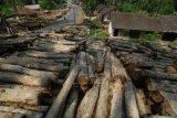 Menteri LHK luncurkan alat identifikasi kayu otomatis