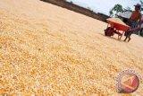 Bulog rencana bangun 6 unit penyimpanan jagung tahun ini