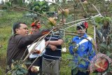 Bupati Bantaeng Ajak Muspida Panen Apel di Agrowisata Bonto Lojong