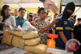 Petugas kepolisian merilis tersangka bandar ganja jaringan Aceh berinisial VA (23) berikut barang bukti ganja di Mapolresta Depok, Jawa Barat, Jumat (13/2). Satuan Reserse Narkoba Polresta Depok menangkap VA atas laporan warga pada Rabu (11/2) malam dan mengamankan barang bukti ganja seberat 12,47 Kg yang disinyalir akan diedarkan ke wilayah Depok dan Jakarta Selatan. ANTARA FOTO/Indrianto Eko Suwarso/ss/mes/15