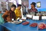 """Kepala Bappeda Aceh Prof, Dr Abubakar Karim sedang melihat jenis kopi dari glondongan (merah kopi), gabah Kopi, beras kopi (arsalan) hingga yang sudah menjadi bubuk kopi pada festival kopi gayo yang bertema """"Kopi Gayo Terunik Di Indonesia Kini Milik Dunia"""" di Gedung Olah Raga (Gor) Simpang Tiga Redelong, Bener Meriah. Rabu (23/4). ANTARAACEH.COM/Zulkarnaian"""