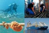 Telkom Papua: kabel optik rusak berhasil diangkat