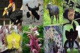 Badan Karantina amankan flora-fauna endemis Papua