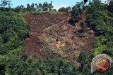 Masyarakat Pasar Kubang Minta Alih Fungsi Hutan
