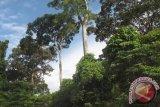 FAO dukung produks dan perdagangan kayu Indonesia