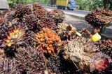 RSPO targets certification of half of Indonesia`s palm oil plantations