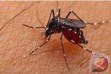Memantau Jentik Nyamuk Juga Bisa Dilakukan Pelajar, Ini Caranya