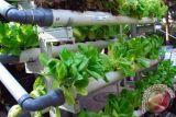 Teknologi Atmosfer Mencegah Kerusakan Produk Pertanian