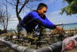 Seorang nelayan memasang Transplantasi terumbu karang di Pantai Bangsring, Banyuwangi, Jawa Timur, Minggu (2/8). Transplantasi yang dilakukan kelompok nelayan sejak tahun 2008 tersebut untuk mengembalikan biota taman bawah laut yang dahulu rusak karena penangkapan ikan menggunakan bom. ANTARA FOTO/ Budi Candra Setya/wdy/15.