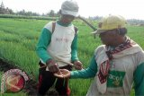 Pemkab bantu petani lampu penangkal hama ulat