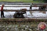Bupati Majene salurkan bantuan alsintan kepada petani