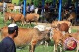 Dinas Peternakan Sulteng Awasi Ternak Qurban