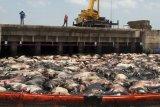 Kapal ternak terbalik akibat badai di perairan Jepang, sebanyak 42 kru hilang