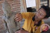 Subroto (44) memperlihatkan arca yang ditemukannya di tengah hutan Jati di desa Banyubiru, Ngawi, Jawa Timur, Kamis (15/10). Arca setinggi 67 centimeter tersebut diduga merupakan bagian dari candi tempat pemujaan di masa kerajaan Majapahit di abad ke-15. Antara Jatim/Ari Bowo Sucipto/zk/15.
