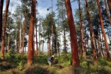Arboretum Wonosobo Jadi Wahana Wisata Edukatif