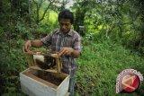 Puluhan kelompok lebah madu Lombok kesulitan modal
