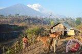 NTB siap mewujudkan program 1.000 Desa Sapi