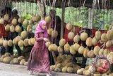 Wisata durian di Lembah Hijau Bandarlampung