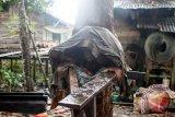 Orangutan betina bernama Japik (4 tahun) menyelimuti dirinya dengan menggunakan baju bekas saat duduk di atas kayu di perkarangan rumah warga yang memeliharanya di Desa Balai Pinang, Kecamatan Simpang Hulu, Kabupaten Ketapang, Kalbar, Kamis (17/12). Orangutan betina yang ditemukan tim medis Yayasan Inisiasi Alam Rehabilitasi Indonesia (YIARI) Ketapang dalam keadaan dirantai dan mengenaskan tersebut, pada kesehariannya selalu mengkonsumsi menu manusia seperti kopi, sambal, es teh dan nasi yang diberikan pemiliknya. ANTARA FOTO/HUMAS YIARI-HERIBERTUS/jhw