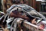 Orangutan betina bernama Japik (4 tahun) menyelimuti dirinya dengan menggunakan baju bekas saat tidur di atas kayu di perkarangan rumah warga yang memeliharanya di Desa Balai Pinang, Kecamatan Simpang Hulu, Kabupaten Ketapang, Kalbar, Kamis (17/12). Orangutan betina yang ditemukan tim medis Yayasan Inisiasi Alam Rehabilitasi Indonesia (YIARI) Ketapang dalam keadaan dirantai dan mengenaskan tersebut, pada kesehariannya selalu mengkonsumsi menu manusia seperti kopi, sambal, es teh dan nasi yang diberikan pemiliknya. ANTARA FOTO/HUMAS YIARI-HERIBERTUS/jhw