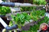 Pemkot Bandarlampung Dorong Warga Kembangkan Tanaman Hidroponik