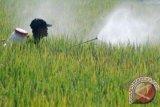 Pemkab Kotim Mulai Kembangkan Penggunaan Pestisida Nabati