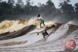Turis asing kian minati selancar di atas ombak Bono Sungai Kampar