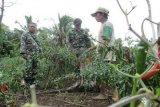 Koramil Yapsel dampingi petani tingkatkan mutu pertanian