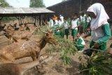DPRD: Pengelolaan Bonbin Mangkang Kurang Optimal