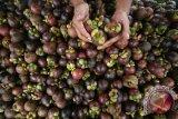 Melalui tugas pembantuan, pemerintah kembangkan tiga tanaman hortikultura unggulan Solok Selatan