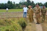 Mentan akan Panen Raya di Lampung Tengah