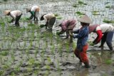 Tingkatkan Minat Petani, Jateng Modernisasi Sistem Pertanian